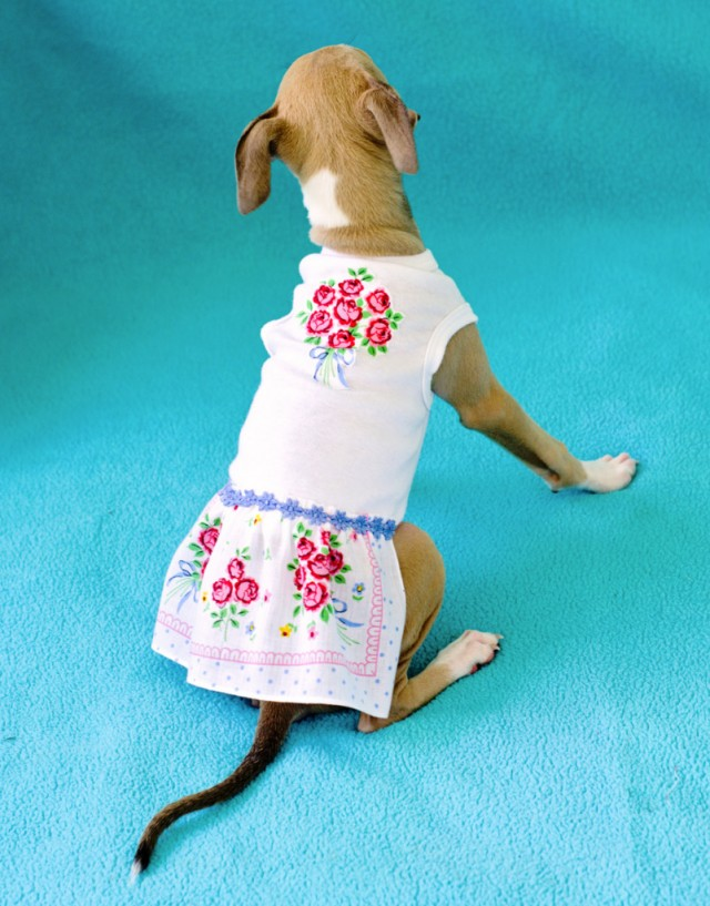 upcycled doggie dress diy