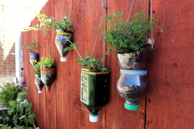 upcycled diy bottle planters