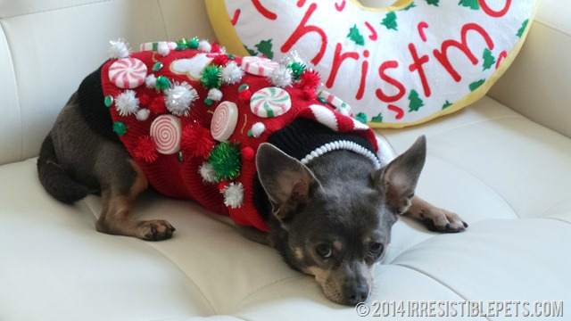 diy xxmas dog sweater