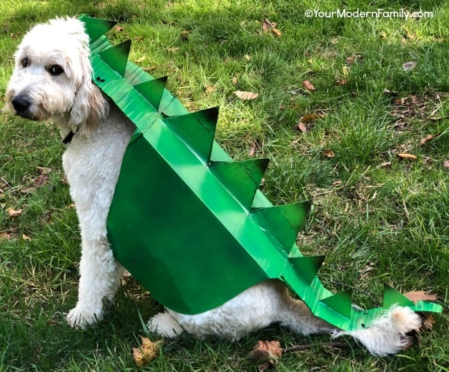 diy dinosaur dog costume